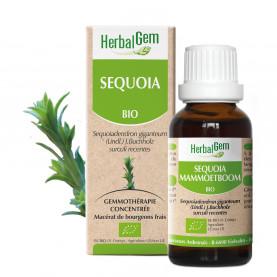 SÉQUOIA - 15 ml   Herbalgem