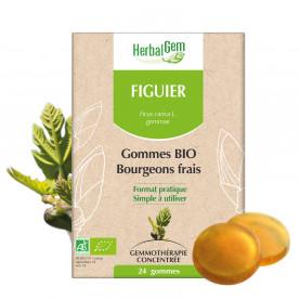 FIGUIER - 24 g | Herbalgem